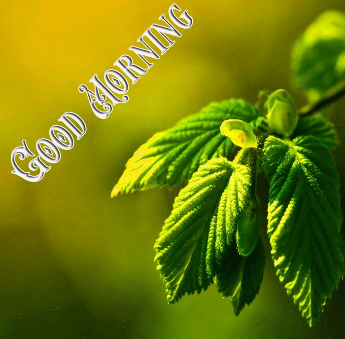gd mrng nature