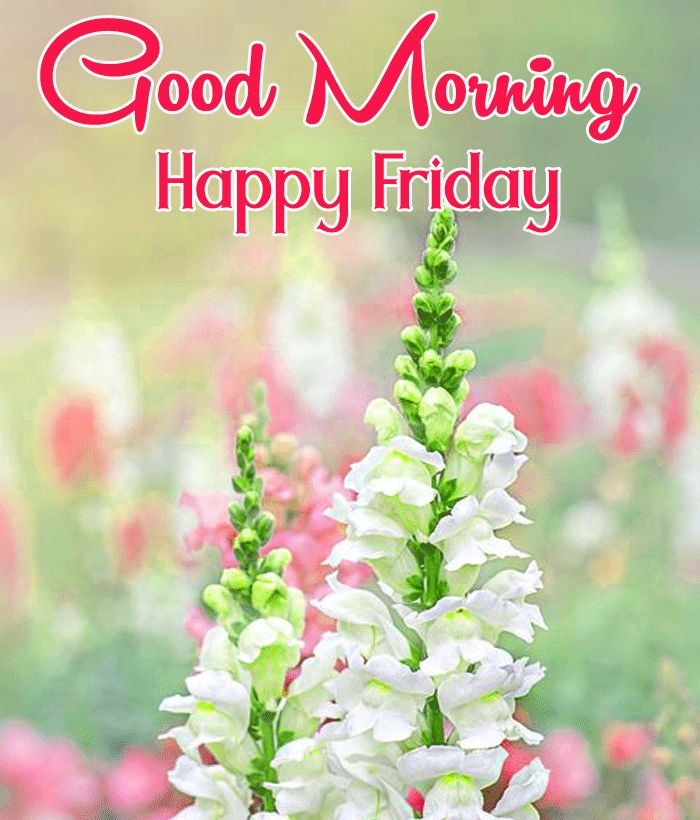 good morning and happy friday