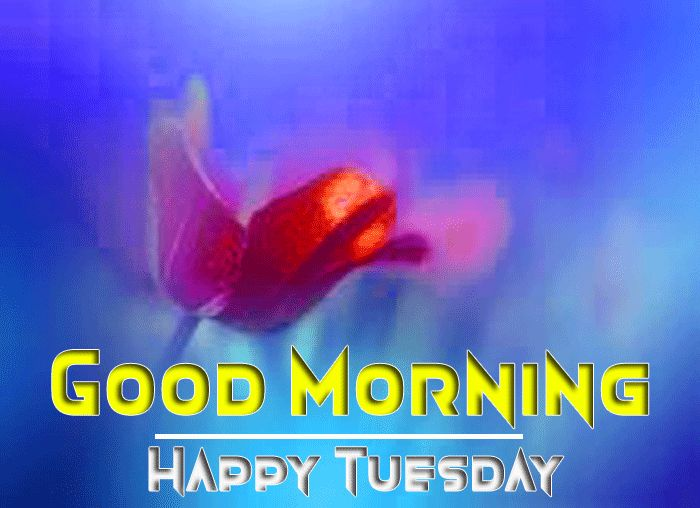 good morning tuesday blessings