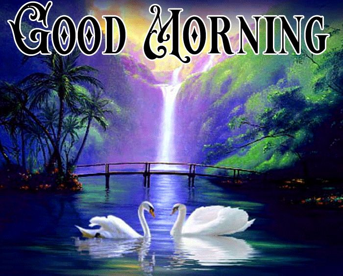 morning nature images with swan