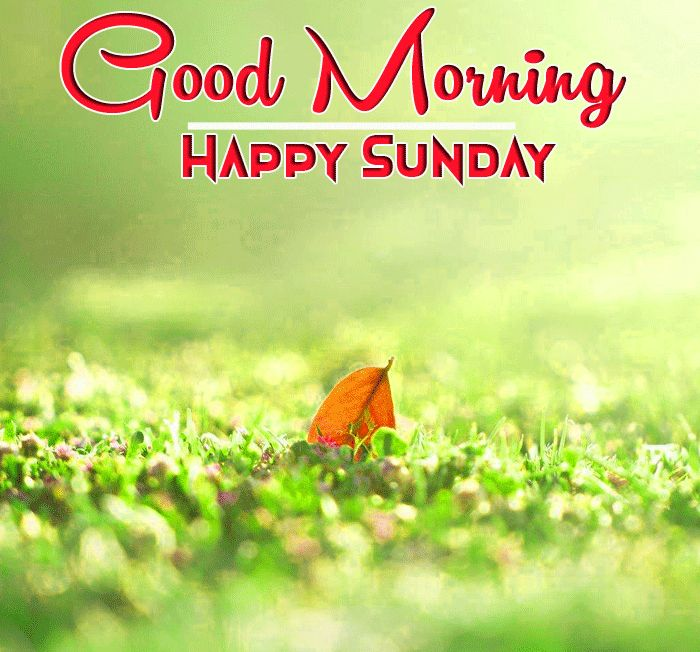 good morning and happy Sunday with leaf and grass