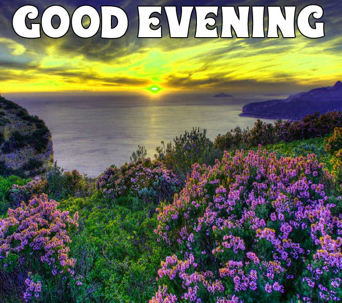 Good Evening flower in sunset pics download