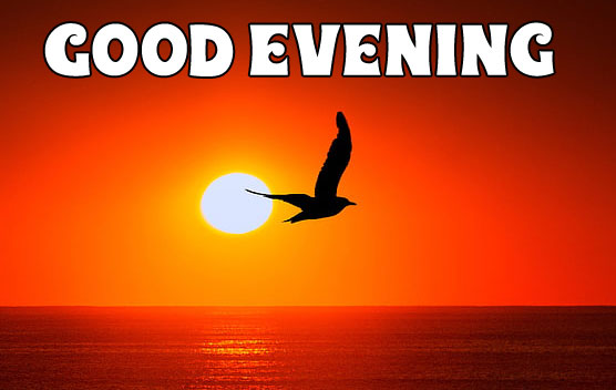 Good Evening fly bird images hd download