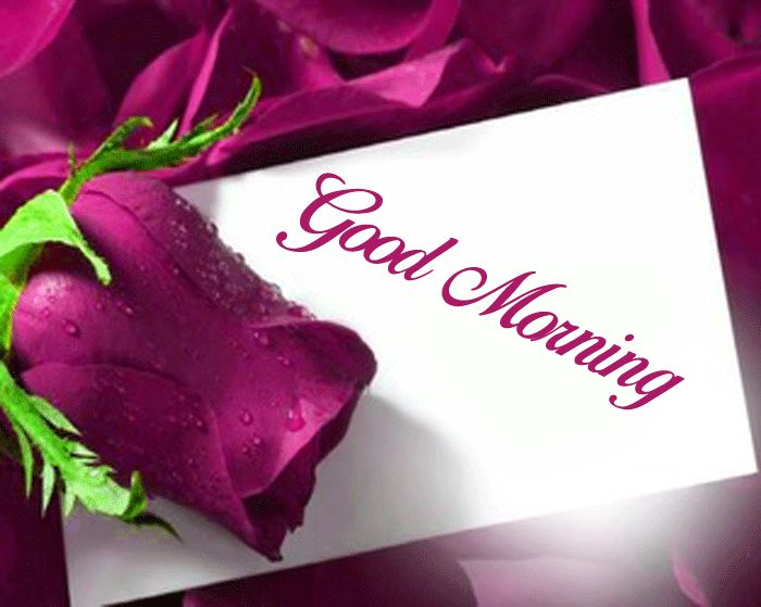 Good Morning photo red rose wishes for gf hd download