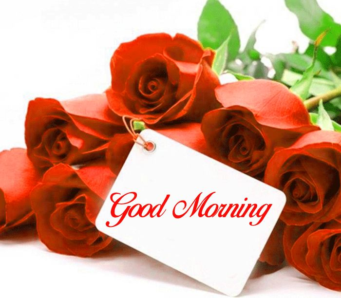 Good Morning red rose images hd download