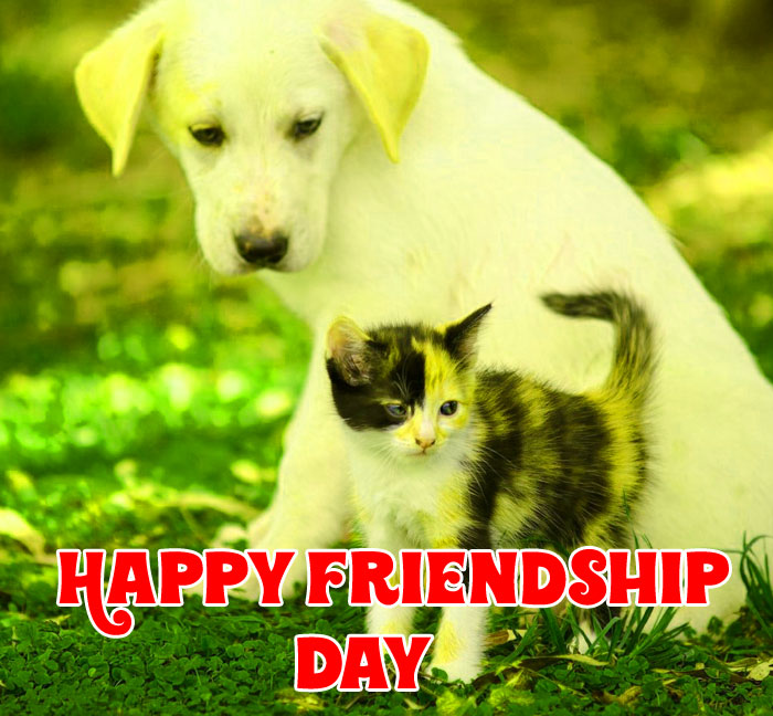 cat and dog Happy Friendship Day photo hd