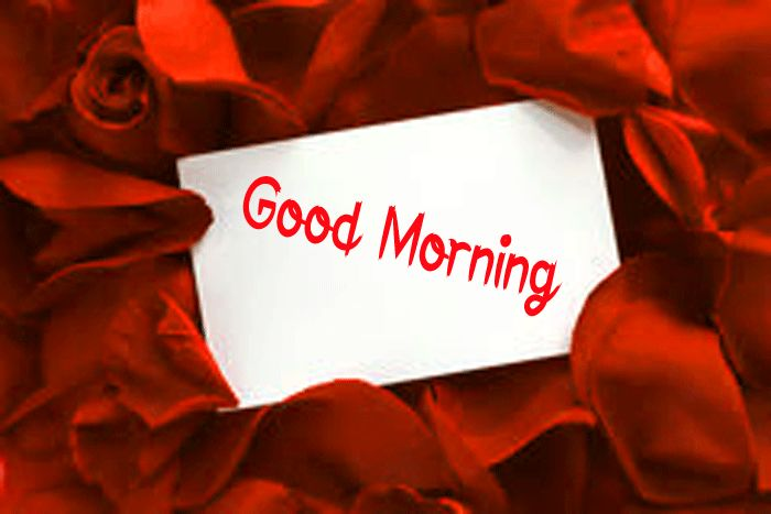 gift card red rose Good Morning photo hd