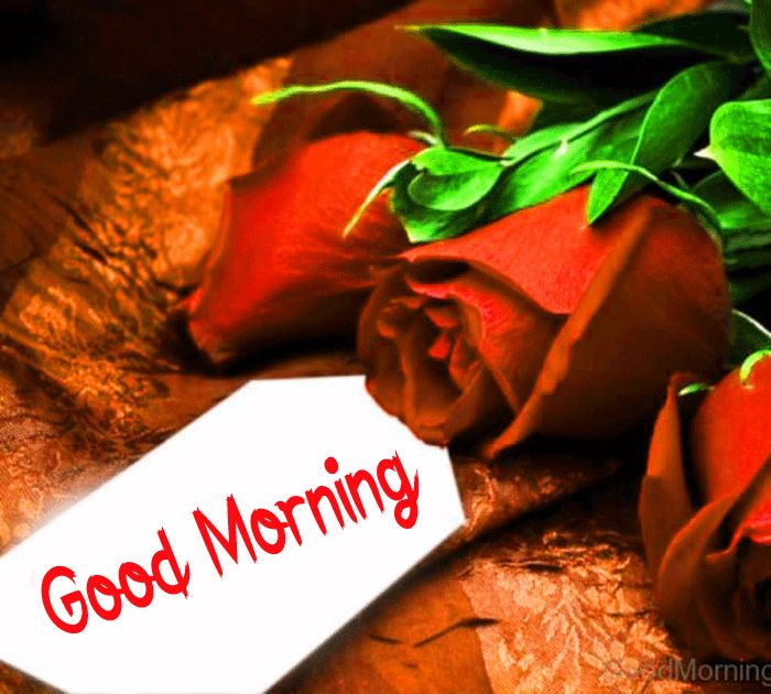 gift card red rose flower Good Morning images hd