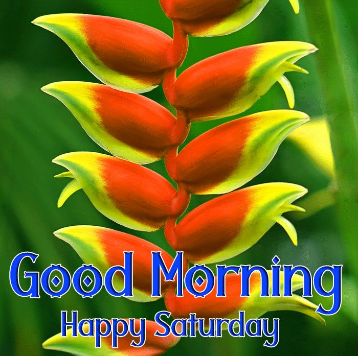 heliconia Good Morning Happy Saturday images