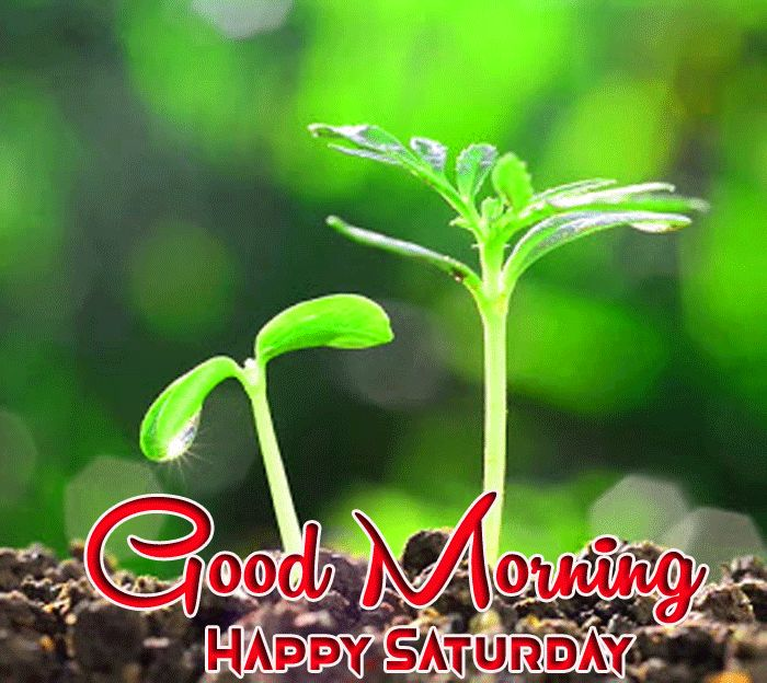 latest green nature Good Morning Happy Saturday images