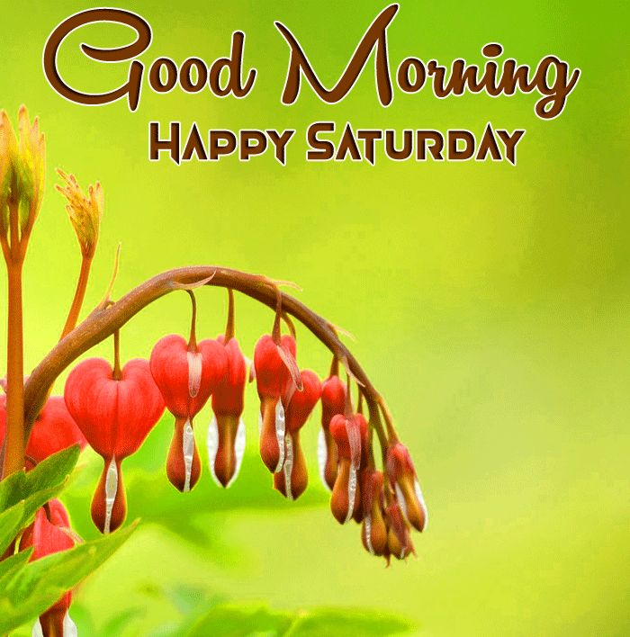 latest naature and flower Good Morning Happy Saturday pics