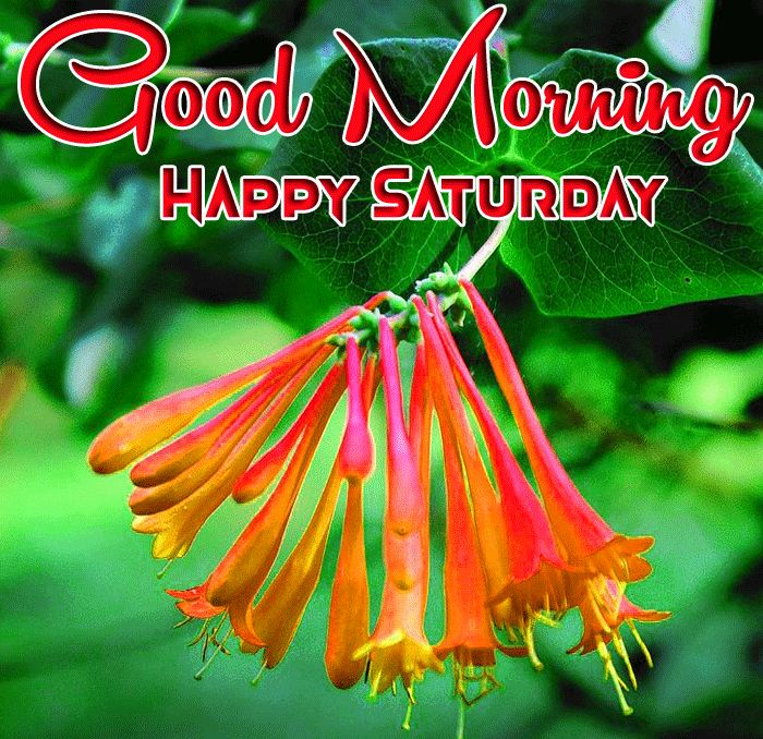 latest red flower Good Morning Happy Saturday photo