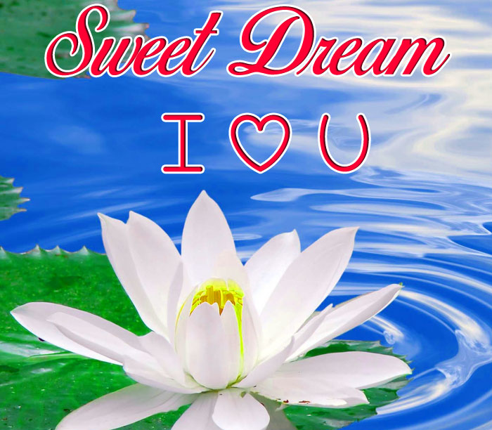 Sweet Dream I Love You lotus images