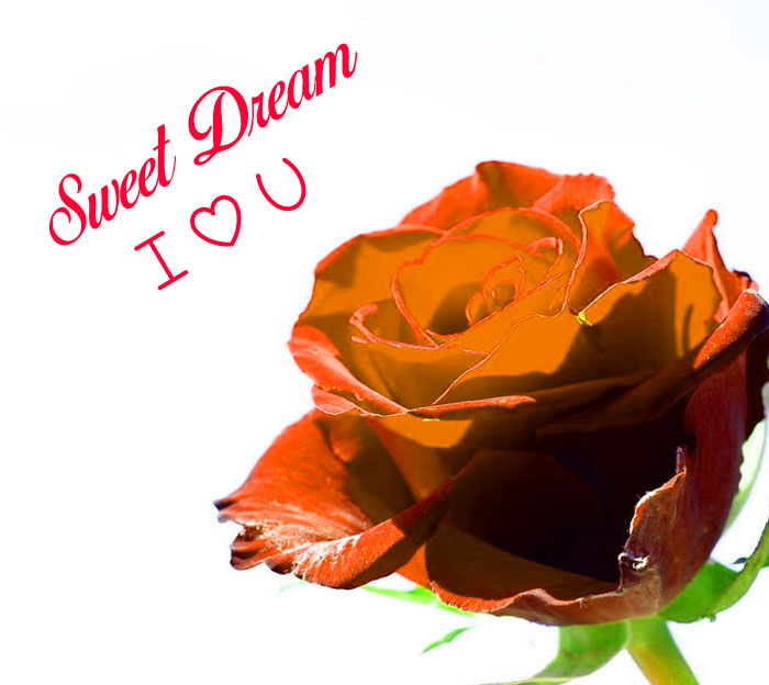 Sweet Dream I Love You red flower pics