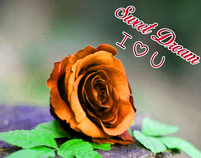Sweet Dream I Love You red rose images