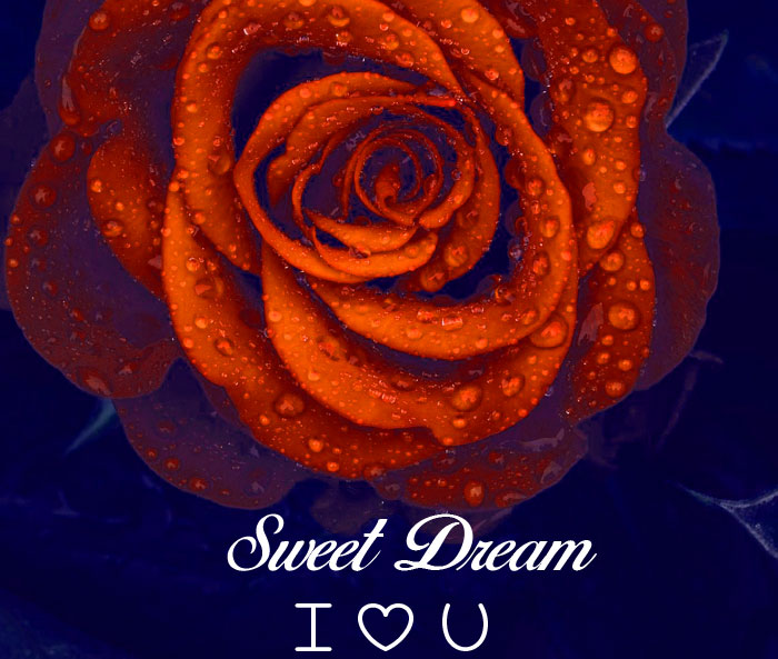 Sweet Dream I Love You rose hd picture