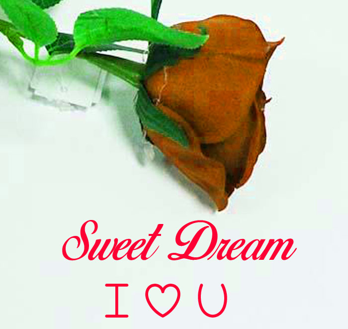 Sweet Dream I Love You rose images