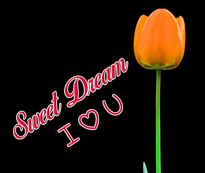 Sweet Dream I Love You tulips images