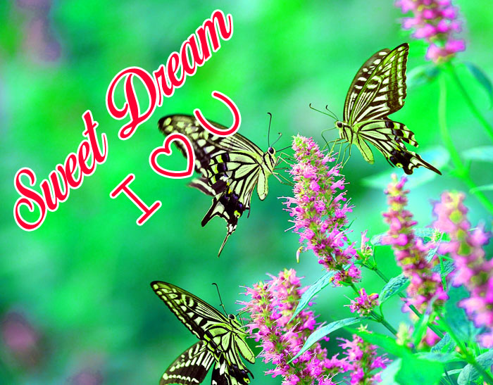 animal butterfly Sweet Dream I Love You pics