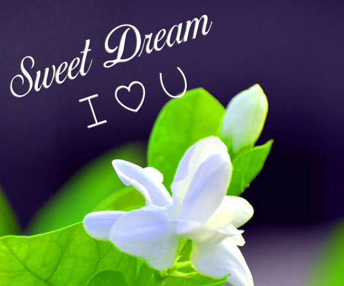 beautiful lily flower Sweet Dream I Love You images