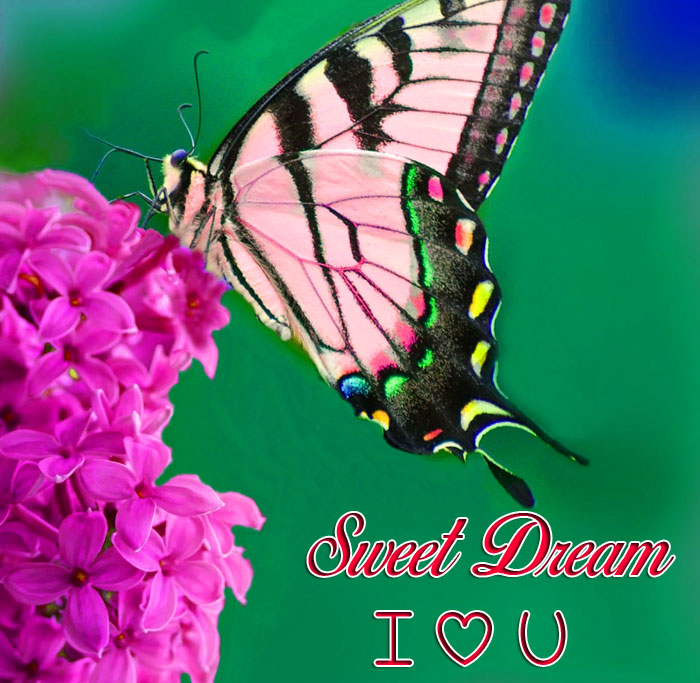 best butterfly and flower Sweet Dream I Love You hdd pics