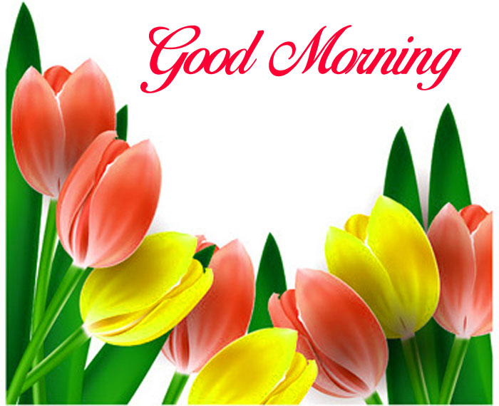 best colorful tulips Good Morning images hd