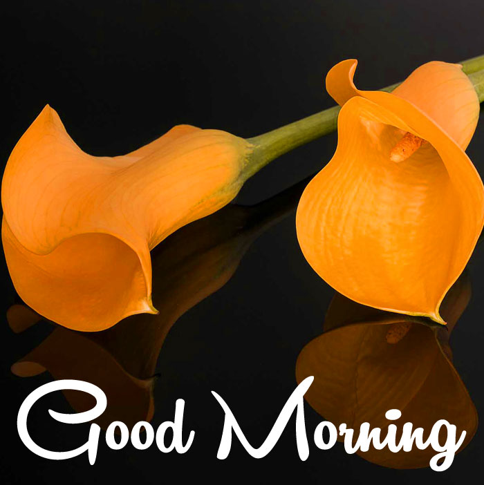 best lily flower Good Morning images hd