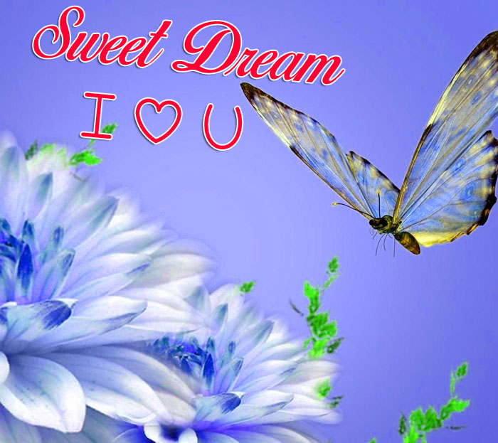butterfly Sweet Dream I Love You images hd