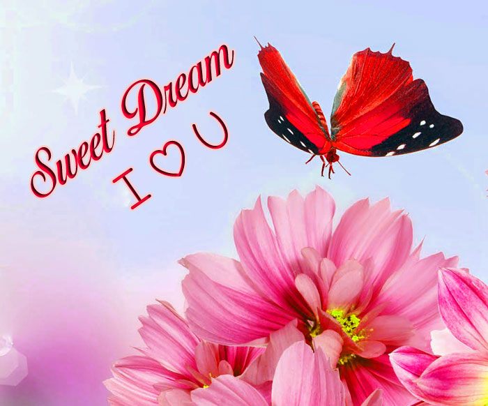 butterfly flower Sweet Dream I Love You images