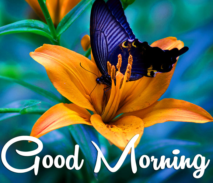 butterfly macro flower Good Morning images hd