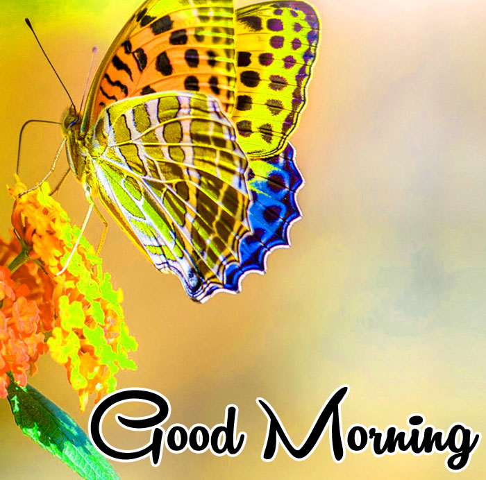 colorful butterfly on flower Good Morning images hd