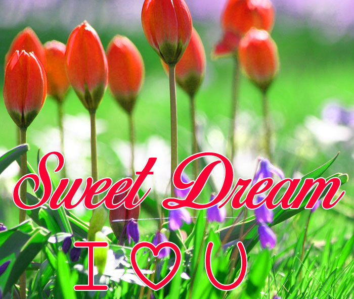 cute spring flower Sweet Dream I Love You images hd