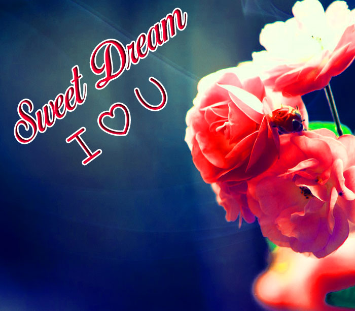 flower Sweet Dream I Love You images