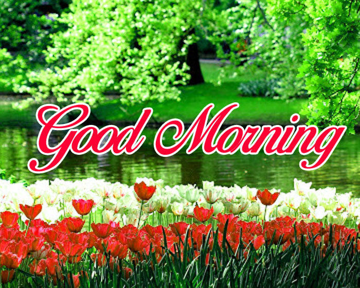 green and red flower Good Morning hd pics