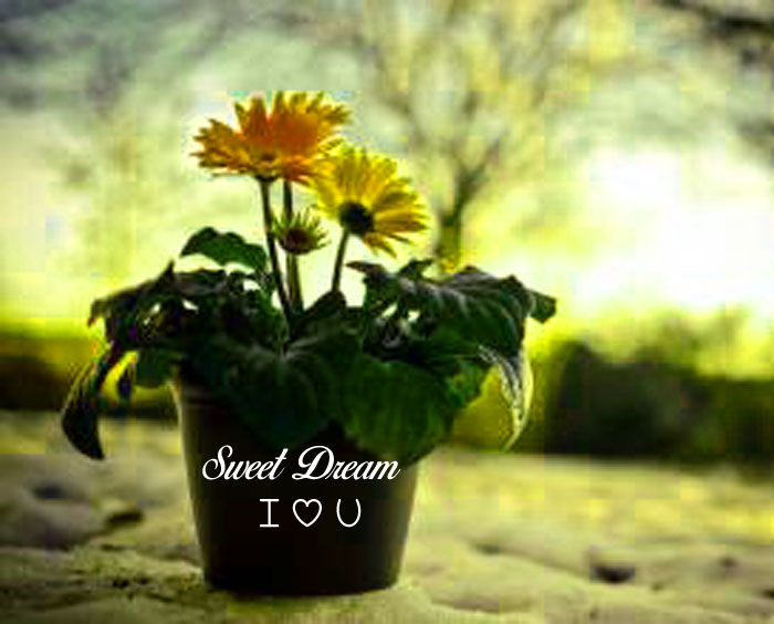 large flower Sweet Dream I Love You images hd