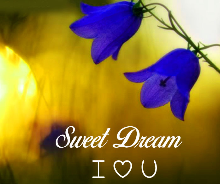 latest blue flower Sweet Dream I Love You images