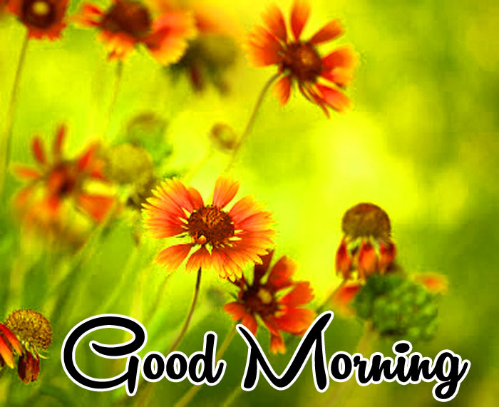 latest flower Good Morning hd picture