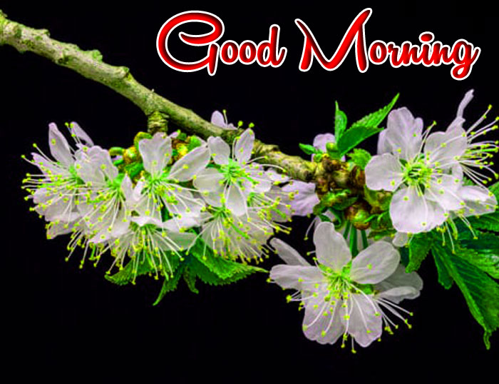 latest flower Good Morning images hd