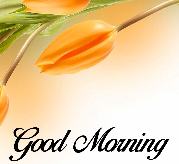 latest lily flower Good Morning photo hd