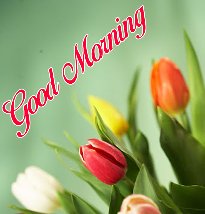 latest red and white flower Good Morning images hd