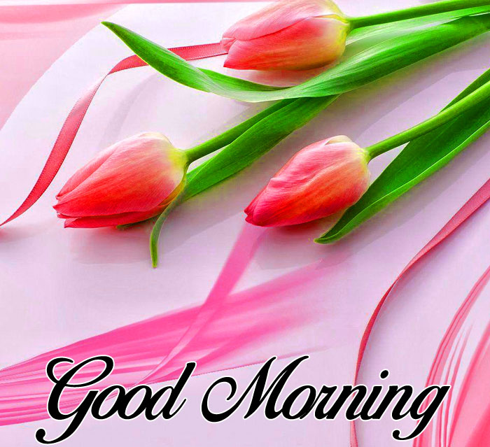 latest red flower Good Morning photo hd