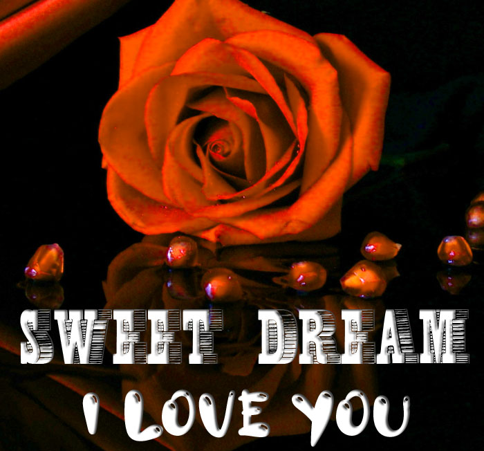 latest rose Sweet Dream I Love You hd picture