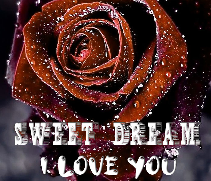 latest rose Sweet Dream I Love You picture