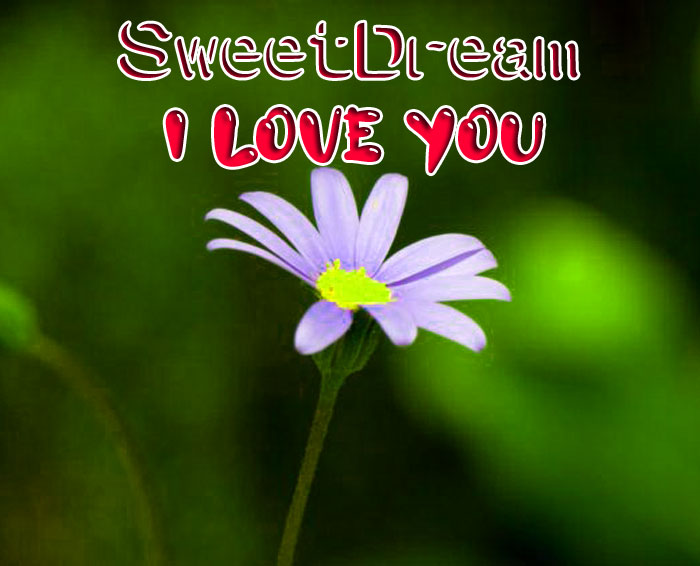 latest white flower Sweet Dream I Love You images