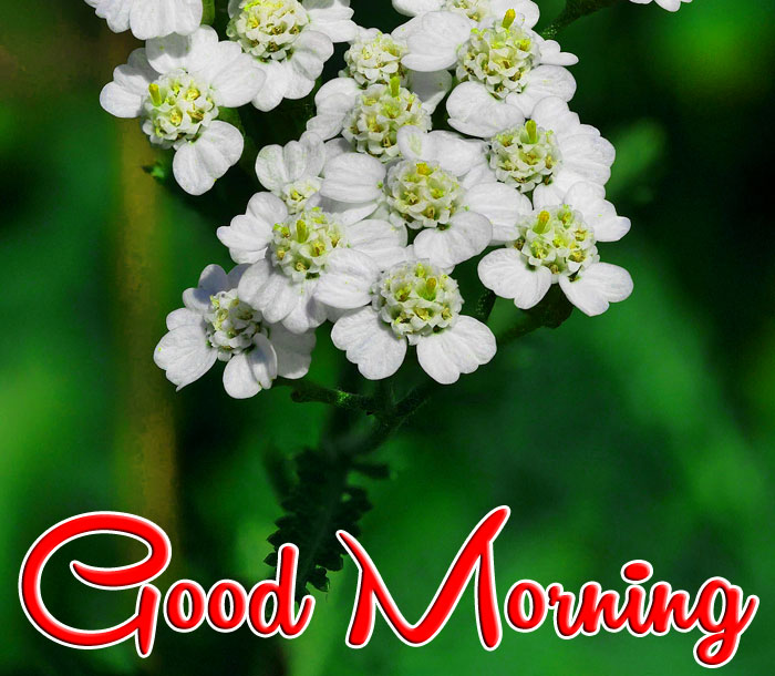 lily Good Morning images hd