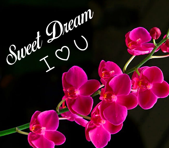 lily Sweet Dream I Love You flower images