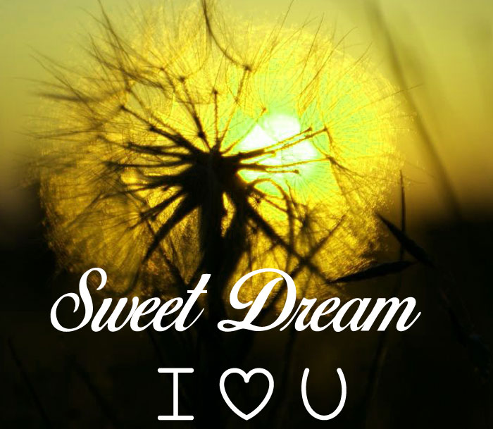 lily Sweet Dream I Love You images hd