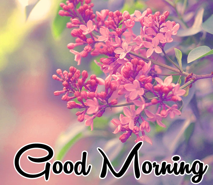 lily flower Good Morning images hd