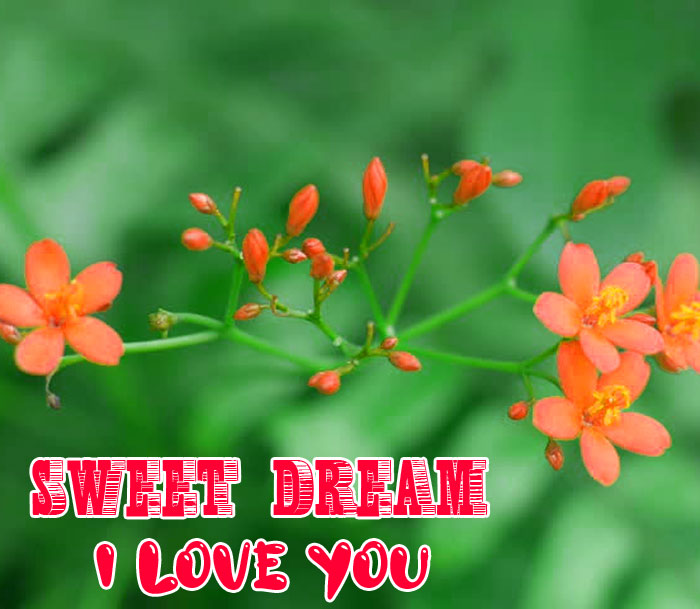 lily flower Sweet Dream I Love You photo