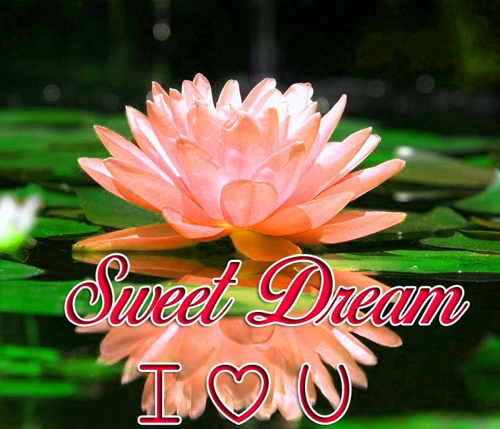 lotus flower Sweet Dream I Love You images hd